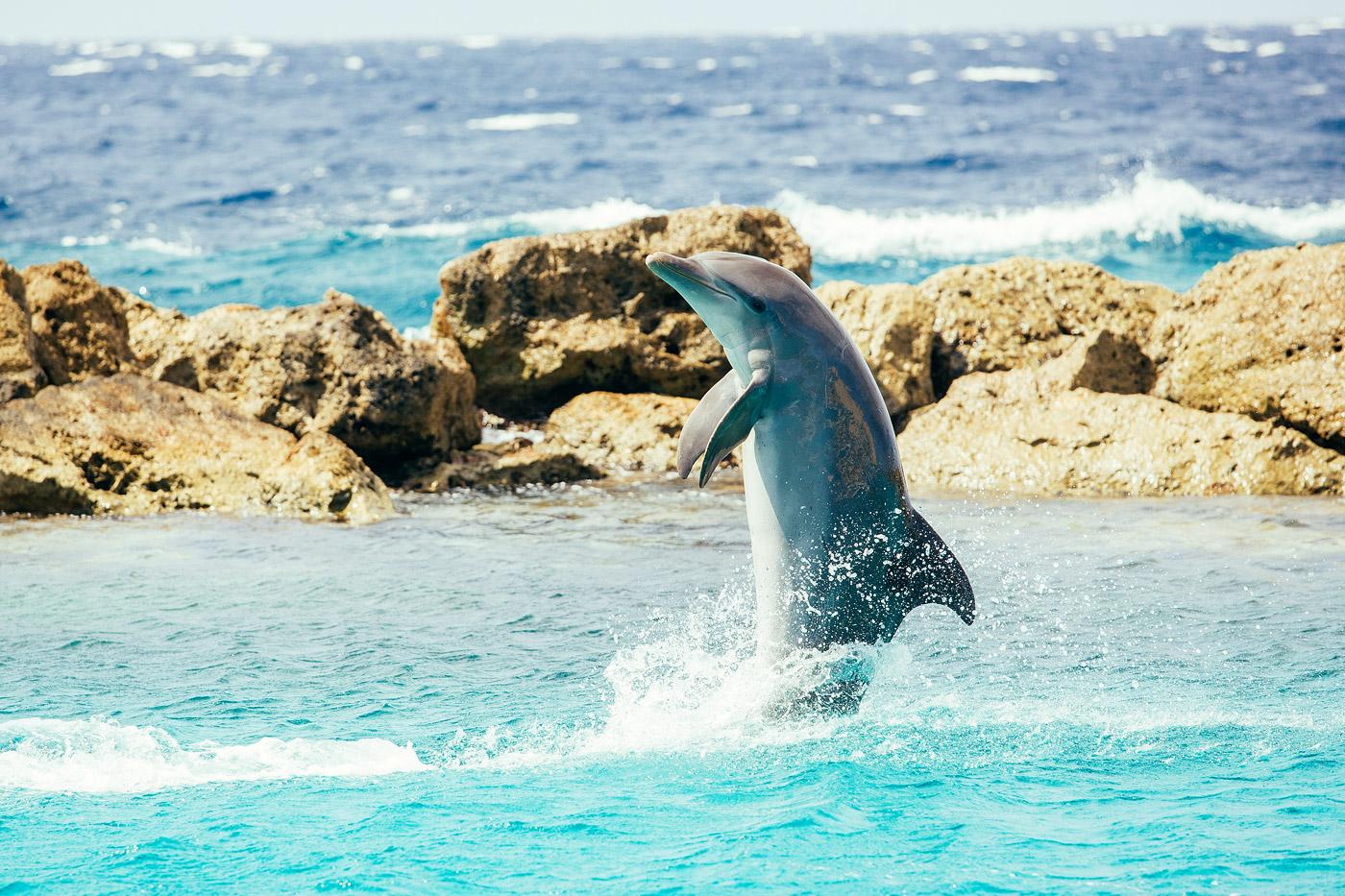 dolfijn show